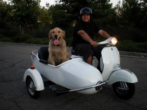Everybody loves a dog in a sidecar ...